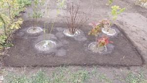 plantation en quinconse