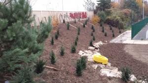 Plantation d'ifs